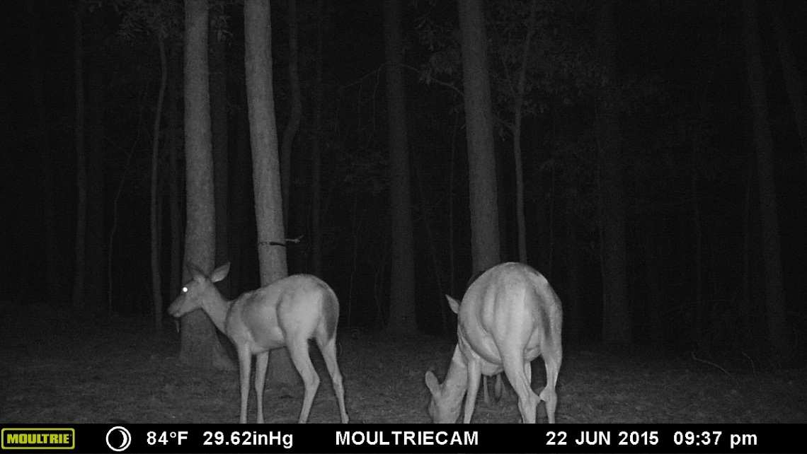tips for hunting with trail cameras