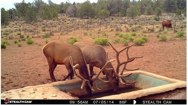 purchasing trail cam