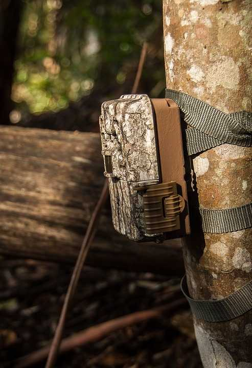 Top 5 Wireless Game Cameras for Hunting