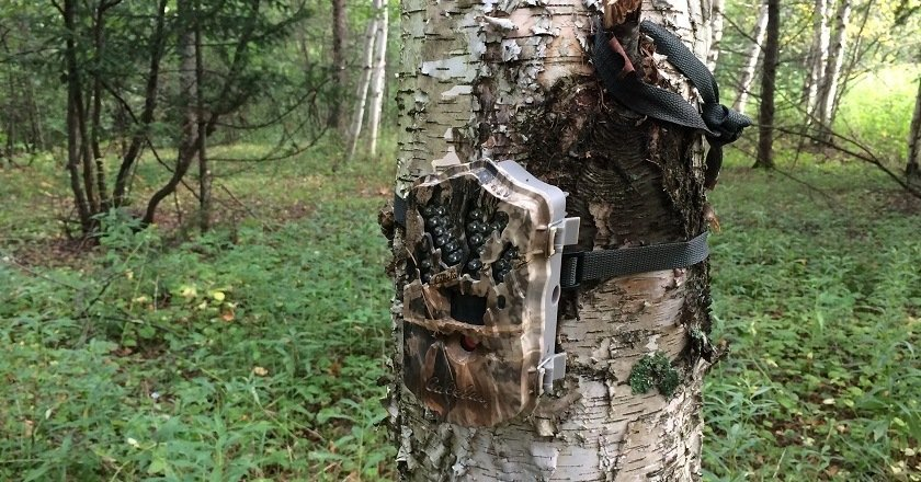 Camouflage a Trail Camera