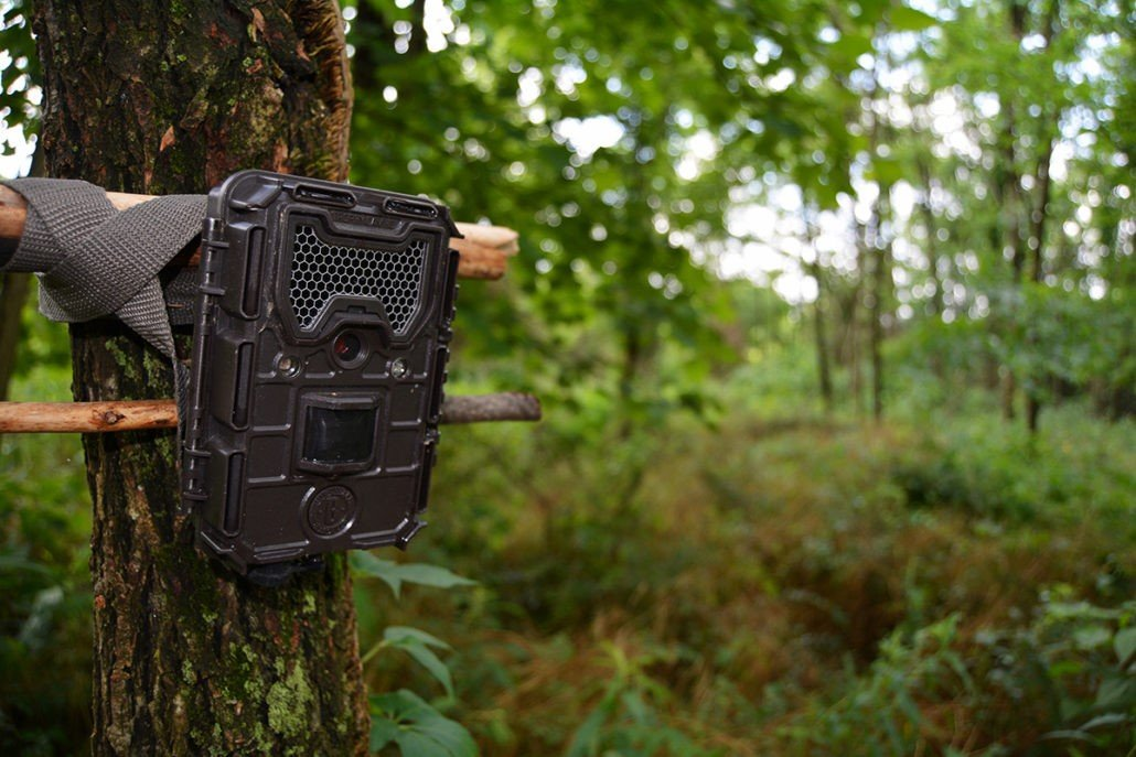 wildgame trail camera lock box
