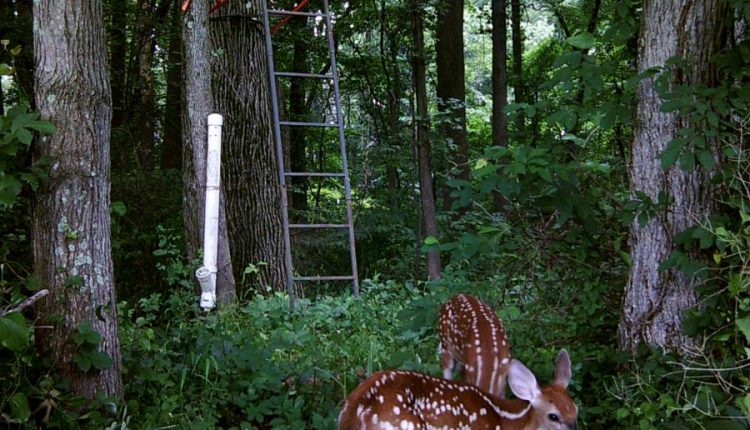 5 Wildgame Innovations Trail Cameras You Might Be Hardly